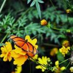 Borboletario Flores Que Voam