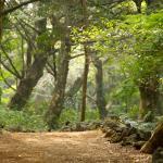 Bijarim Forest