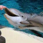 Siegfried And Roys Secret Garden And Dolphin Habitat