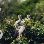 Brt Wildlife Sanctuary