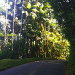 Pepeekeo Scenic Drive