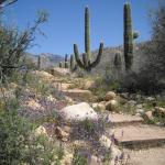 Catalina State Park