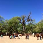 Houstons Horseback Riding