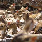Tirumala Deer Park Reserve