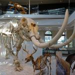 Natural History Museum Of Los Angeles County
