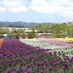Echigo Hillside Park