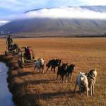 Svalbard Husky