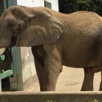 Akita Omoriyama Zoo