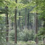 Sonian Forest