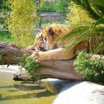 Lo Zoo Di Napoli