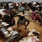 Main Fish Market