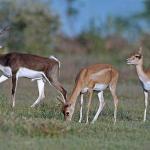 Mahavir Harina Vanasthali National Park