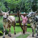 Jayaprakash Narayan Biodiversity Park