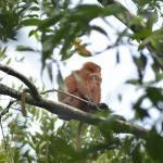 Sandakan Rainforest Park