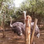 Accra Zoo And Endangered Primate Breeding Centre
