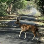 Katarniaghat Wildlife Sanctuary