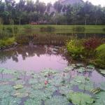 Taman Kembang Sepatu