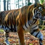 Bhairamgarh Wildlife Sanctuary
