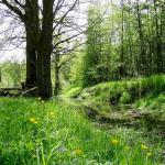 Amtsvenn-hundfelder Moor