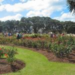Parnell Rose Garden