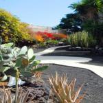 Aloe Park Tenerife