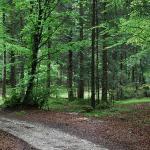 Parco Naturale Paneveggio - Pale Di San Martino