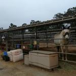 Serrano Creek Ranch Equestrian Center