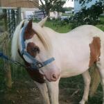Susies Pony Rides