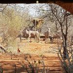 Grey Ghost Safaris