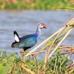 Kalametiya Bird Sanctuary