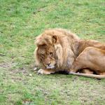 Suffolk Wildlife Park