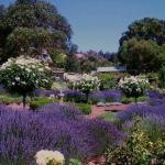 Balingup Lavender Farm