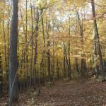 Cherry Hill Nature Preserve