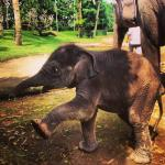 Elephant Safari Park Taro-bali
