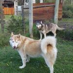 Garden Route Wolf Sanctuary