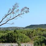 Narbonnaise En Mediterranee Natural Regional Park