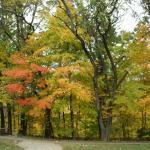 Caldwell Nature Preserve