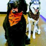 A Time To Play Doggie Daycare And Boarding