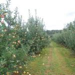 Weed Orchards