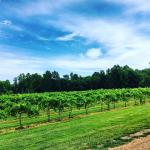 The Natchez Hills Vineyard (Middle Tennessee Wedding Venue)