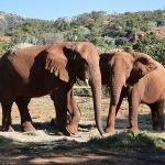 The Elephant Sanctuary - Hartbeespoort