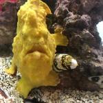 Team Ecco Ocean Center And Aquarium