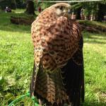 Cumberland Bird Of Prey Centre (thurstonfield)