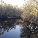 Green Swamp Wilderness Preserve