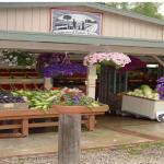 Underwood Family Farm-Somis
