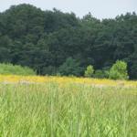 Boot Lake Nature Preserve