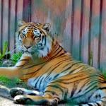 Cherry Brook Zoo Inc.