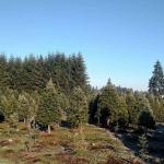 Mendez Tree Farm
