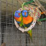 Flying High Bird Sanctuary
