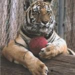 Hillcrest Park Zoo